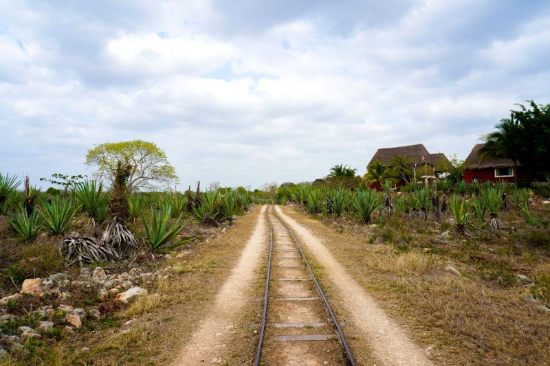 Riding Mules on Tracks at Hacienda Sotuta de Peon